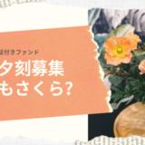 【本日夕刻】SAMURAI×Jトラスト社コラボの保証付きファンドが募集されます